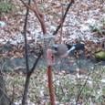 テラスに集う鳥