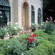 ベーリック・ホール 玄関前のバラ